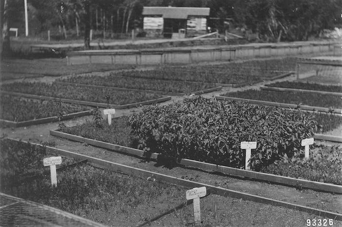 Image of Agricultural Experiment & UI Extension Publications