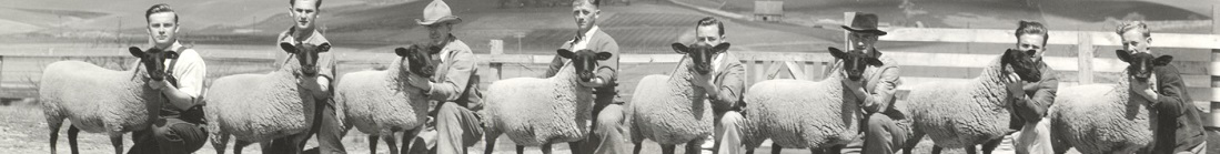 1936 photograph of University of Idaho students with sheep at the Little International